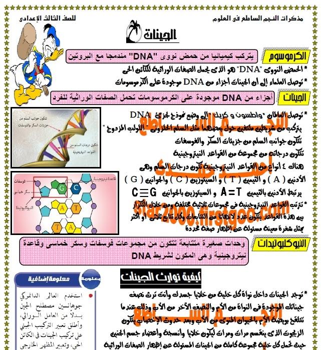 exam-eg.com_13359897396.jpg