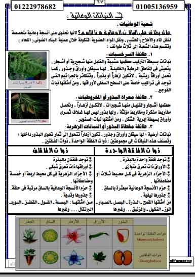 exam-eg.com_1384481253913.jpg