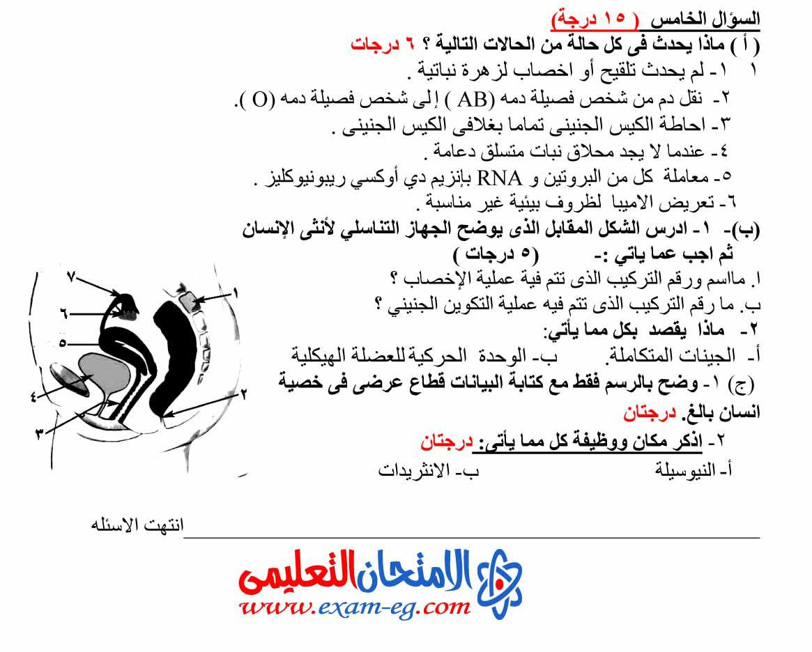 exam-eg.com_140333359413.jpg
