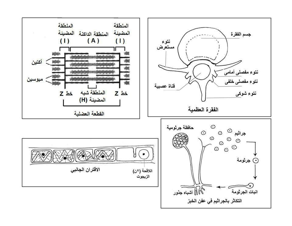 exam-eg.com_1434730819553.jpg