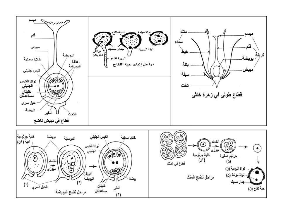 exam-eg.com_1434730819615.jpg