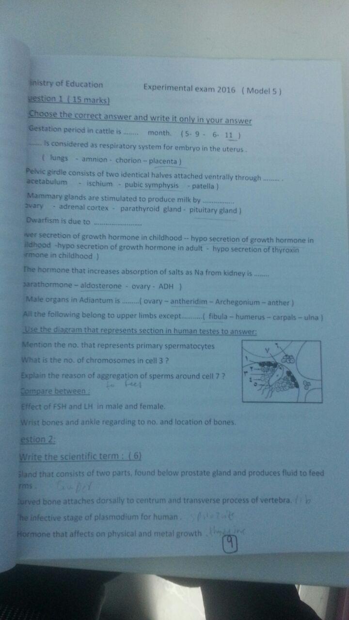 exam-eg.com_1464825103245.jpg