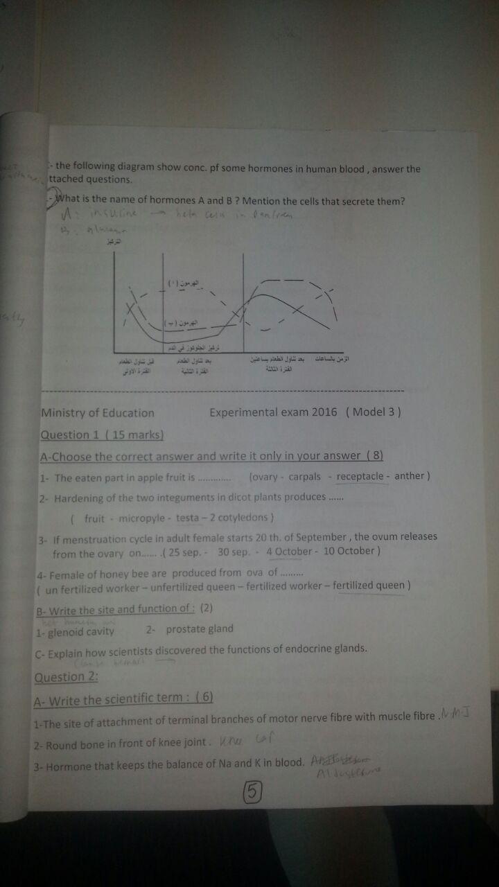 exam-eg.com_1464825103338.jpg
