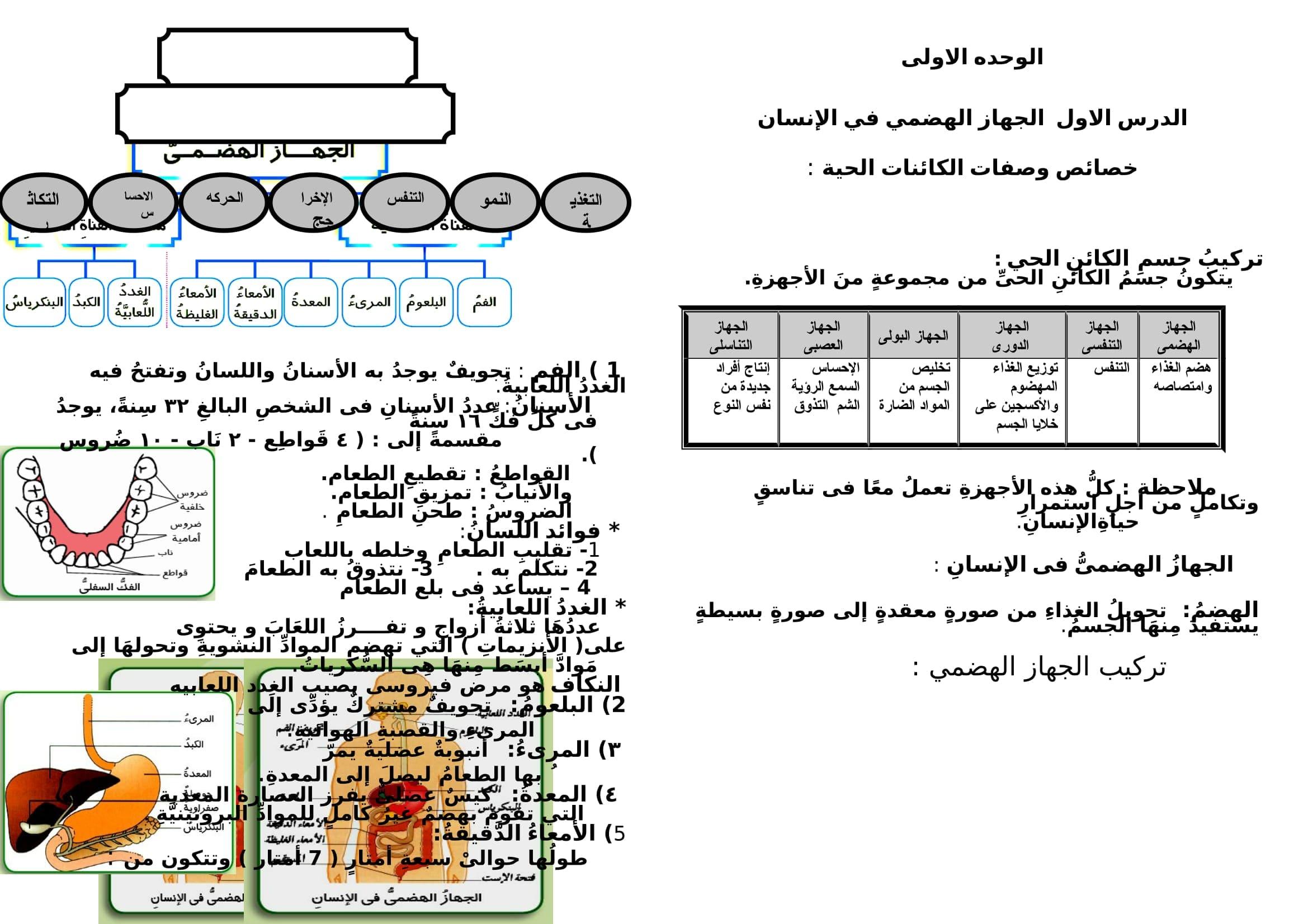 exam-eg.com_1488466091931.jpg