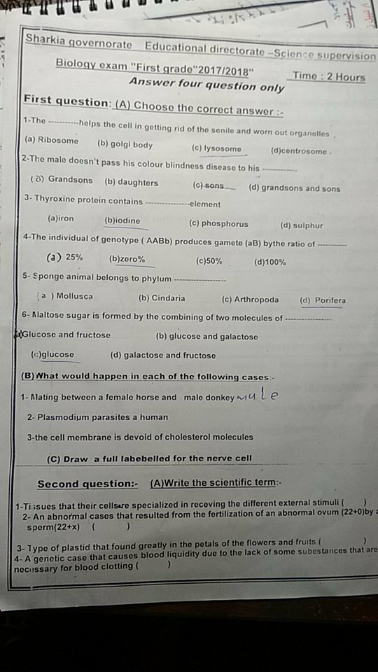 exam-eg.com_1515087438971.jpg