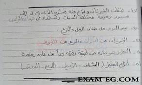 exam-eg.com_15159674174485.jpg