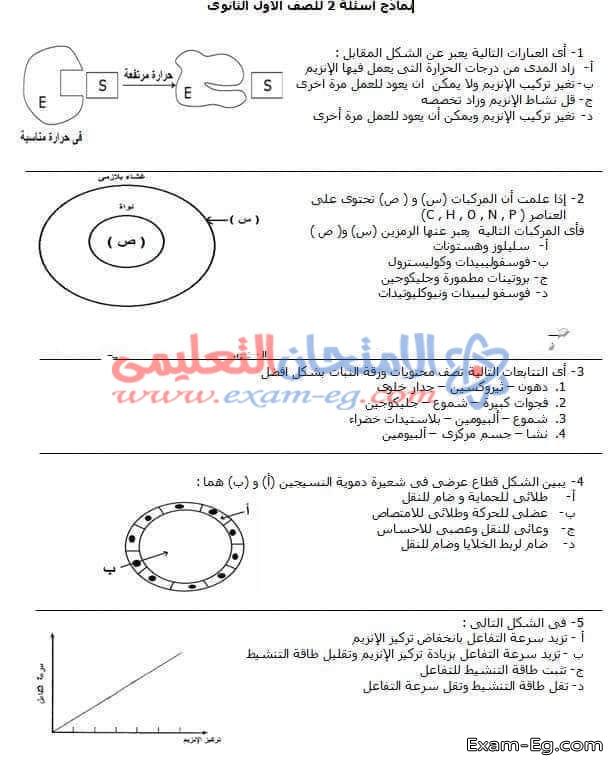 exam-eg.com_1546260495961.jpg