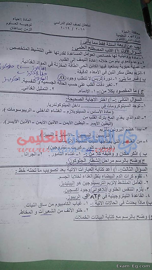 exam-eg.com_1546591884445.jpg