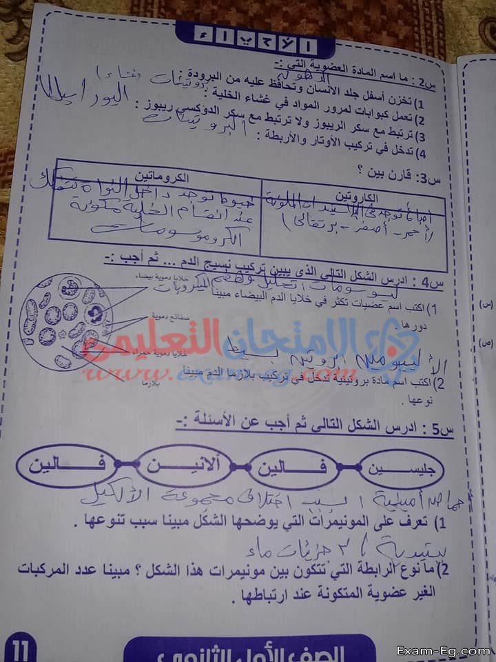 exam-eg.com_15474138200111.jpg