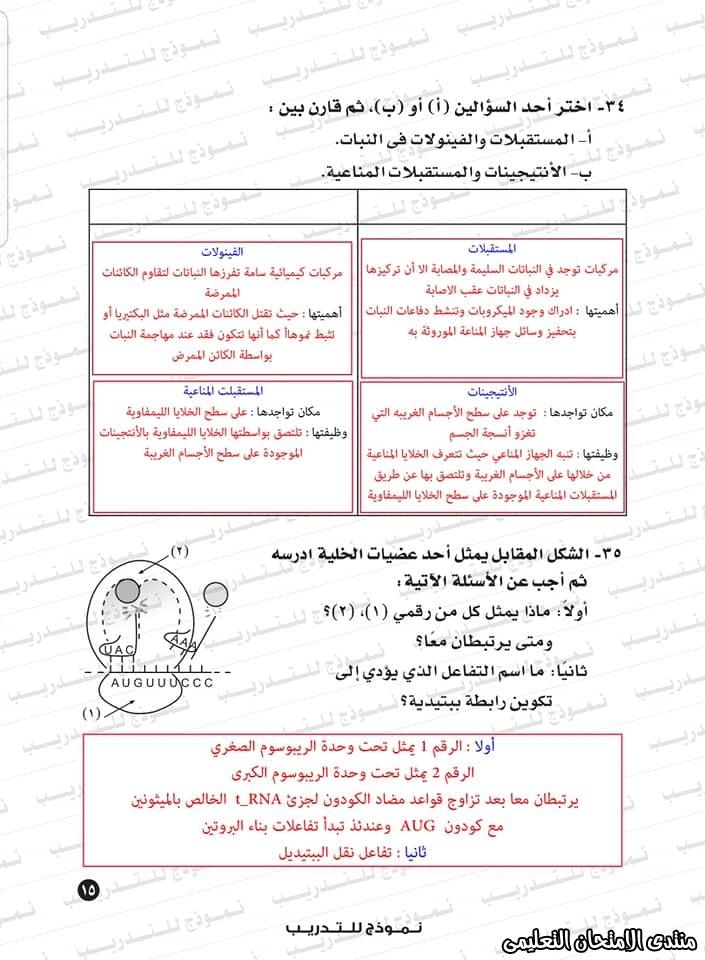 exam-eg.com_159338323409192.jpg