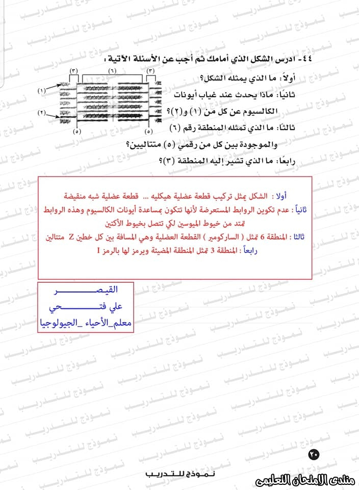exam-eg.com_159338323415854.jpg