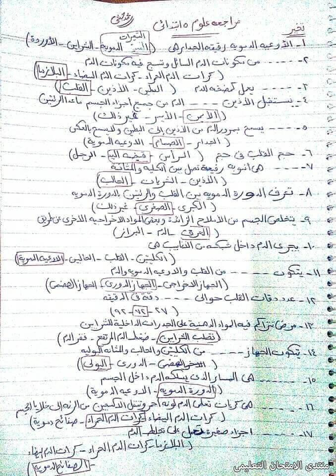 exam-eg.com_161832759233721.jpg