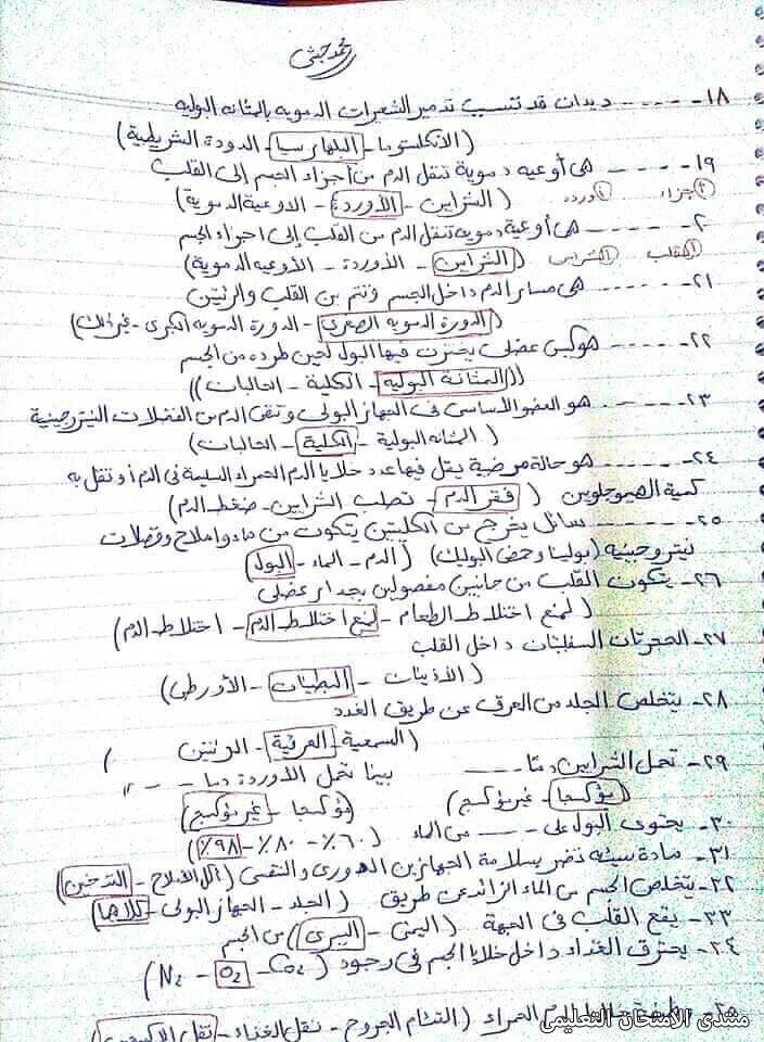 exam-eg.com_161832759238372.jpg