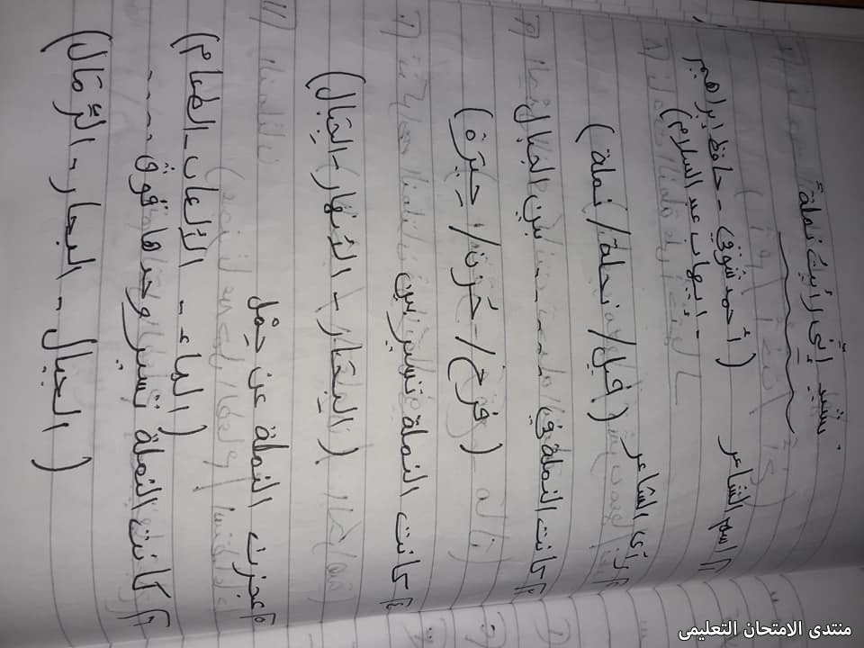 exam-eg.com_16189310435918.jpg