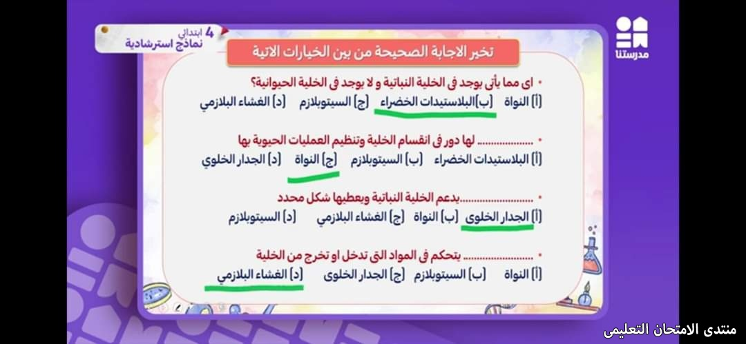 exam-eg.com_161928003406041.jpg