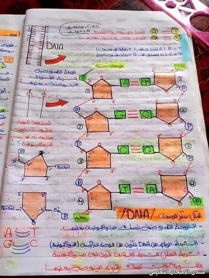 exam-eg.com_162024189130965.jpg
