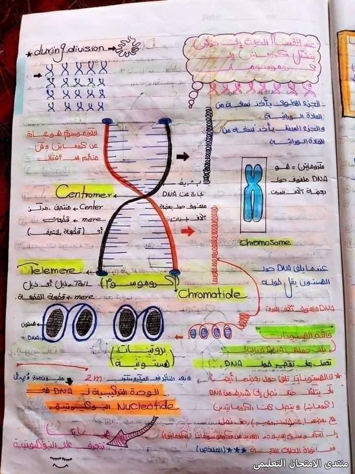 exam-eg.com_1620241891610811.jpg