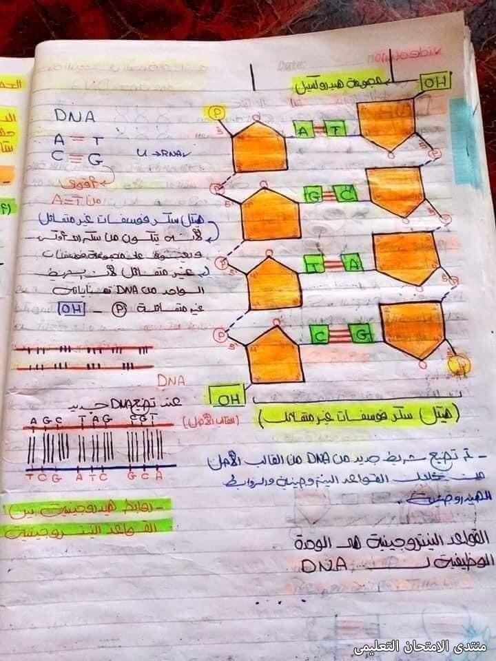 exam-eg.com_162024189166112.jpg