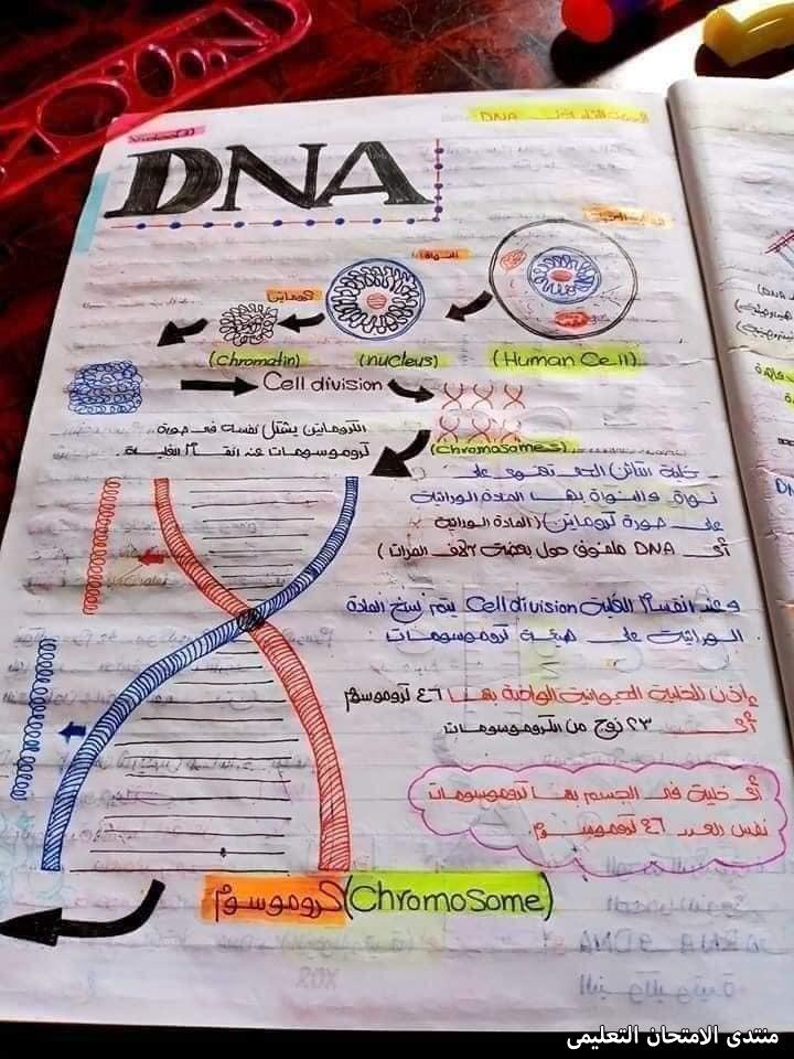 exam-eg.com_1620241891703613.jpg