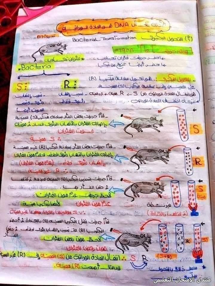 exam-eg.com_1620241891747414.jpg