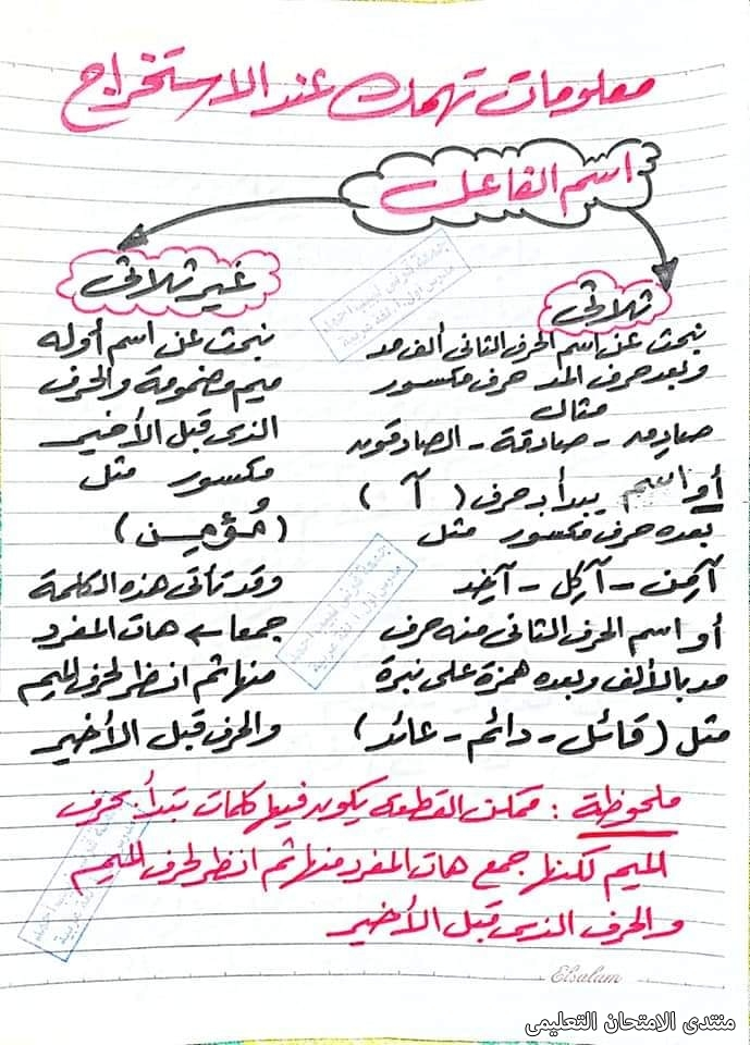 exam-eg.com_162280755642239.jpg