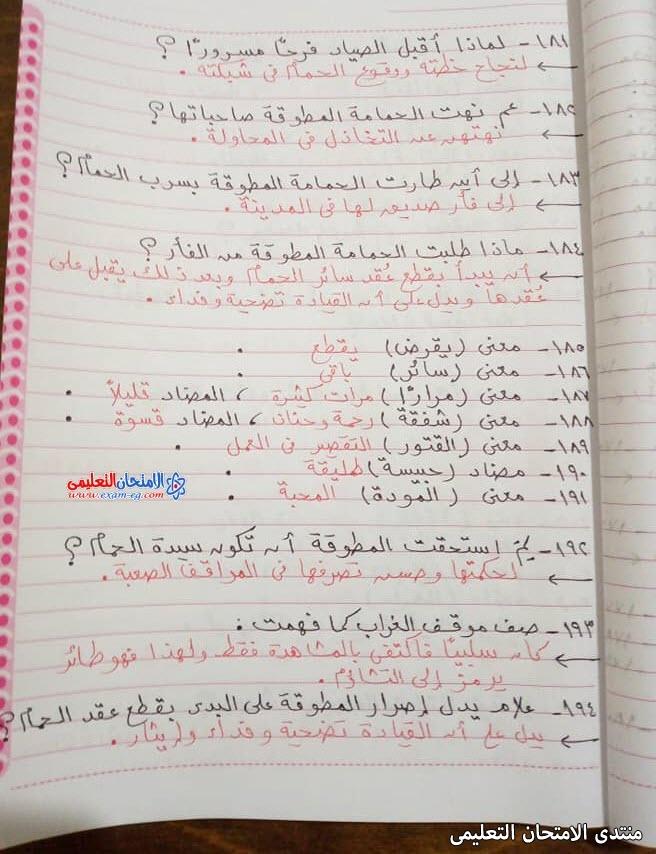 exam-eg.com_1622816816856416.jpg