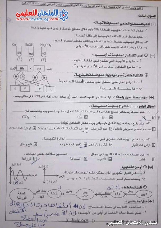 exam-eg.com_162301385780022.jpg