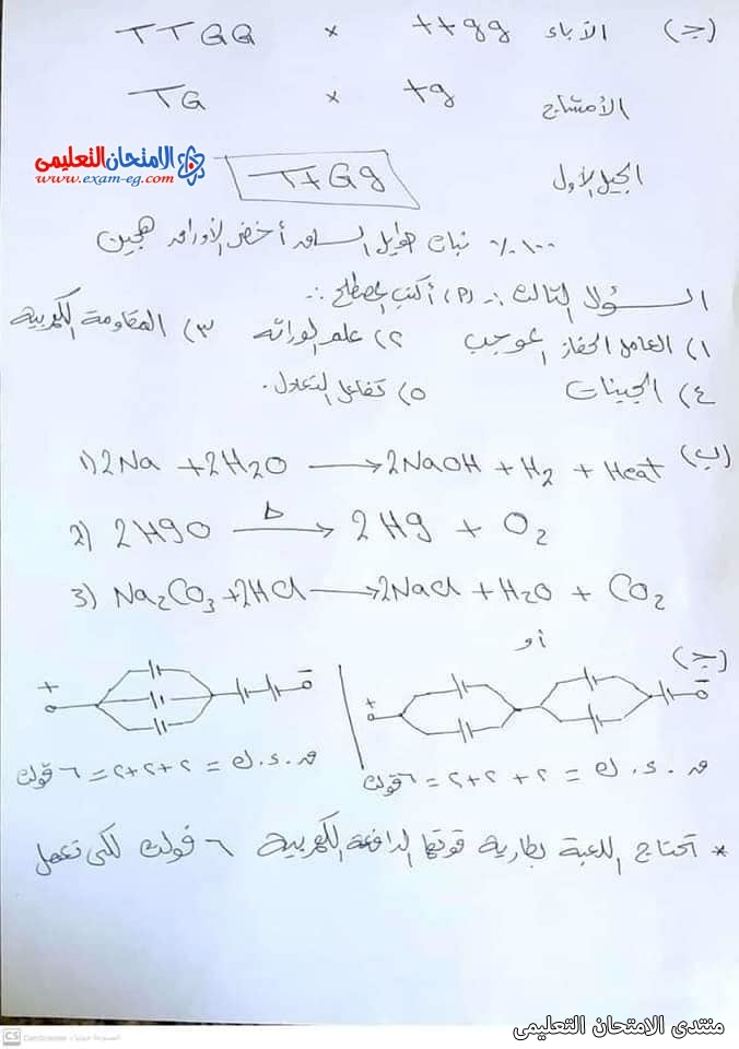 exam-eg.com_162308349309384.jpg