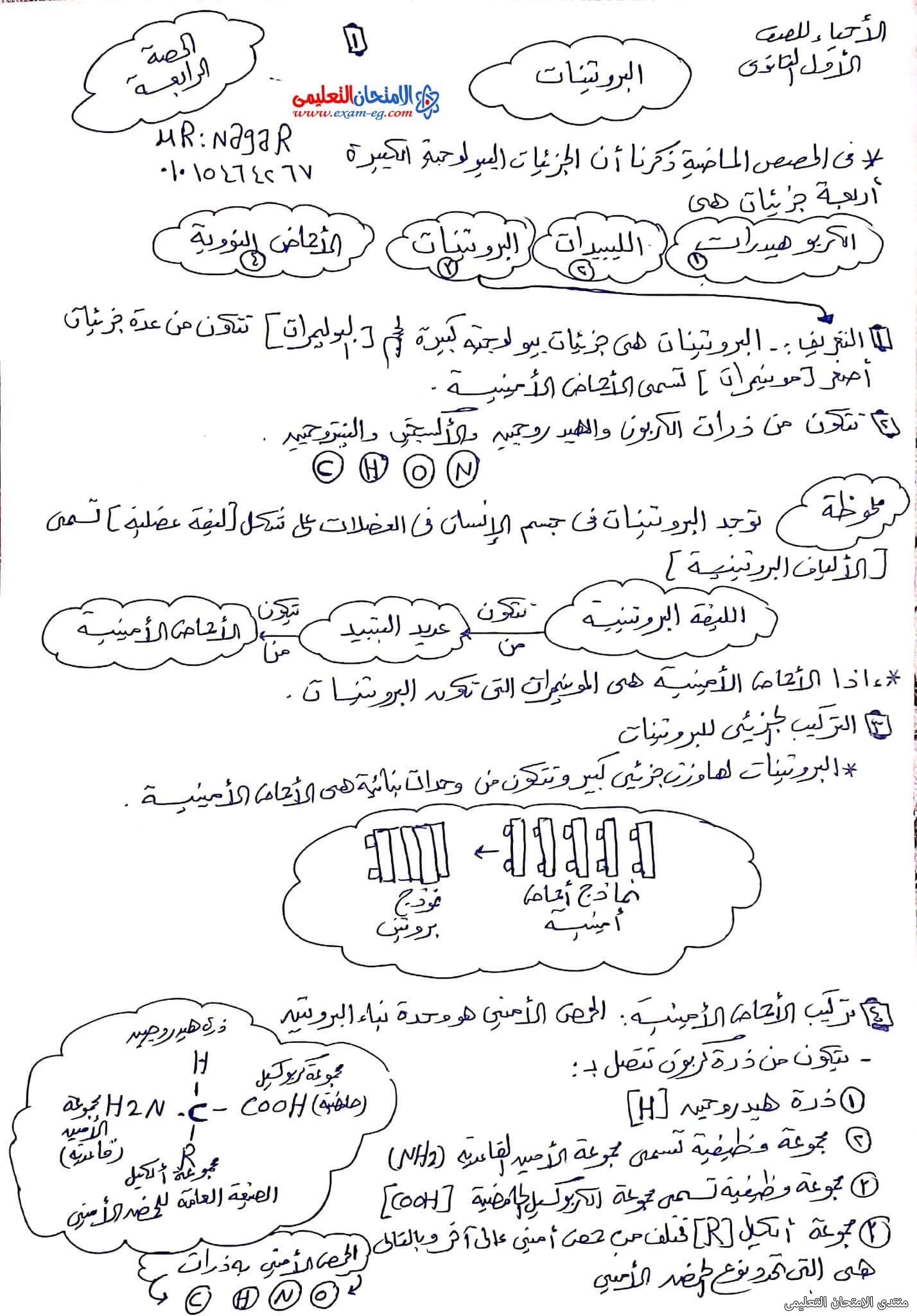 exam-eg.com_163343553951921.jpg