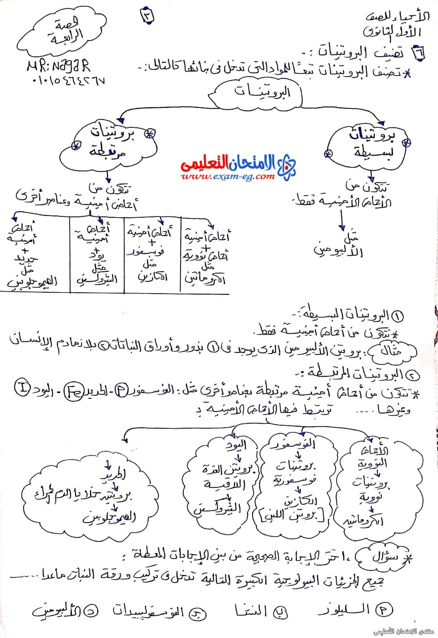 exam-eg.com_163343553975493.jpg